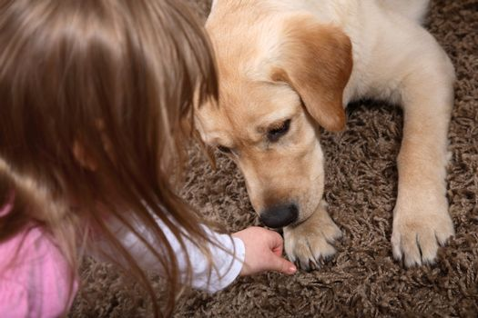 A young girl playing with a puppy during a dog therapy session.