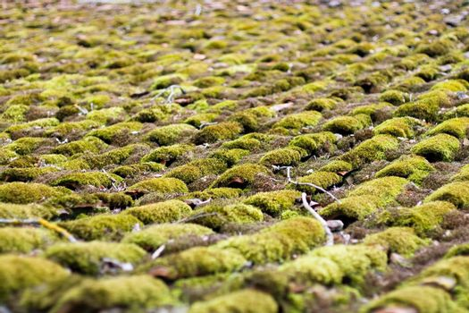 Old tile mossy roof Abstract background