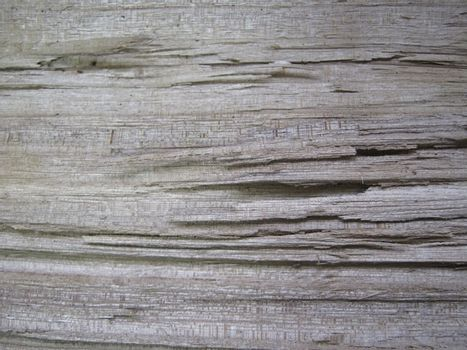 the texture of old wood, fiber macro