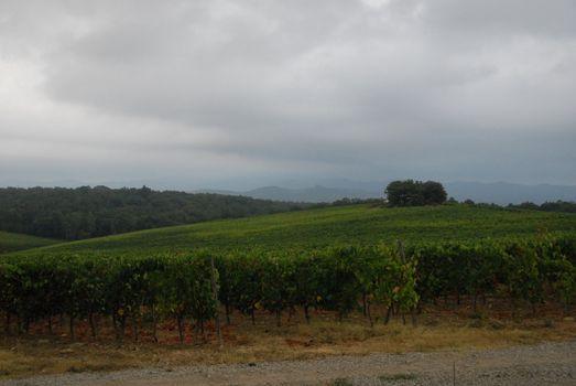 Wineyards of Toscana