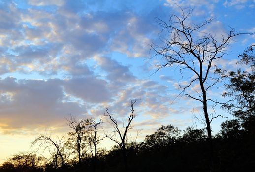 Trees' silhouettes in sunset