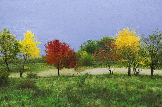 Multicoloured trees