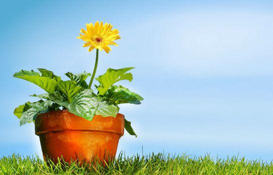 Flower pot on the grass against a blue sky