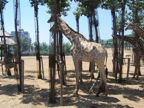 China, Zoo Park. The safari