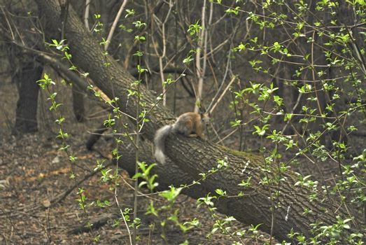 may forest with squirrel
