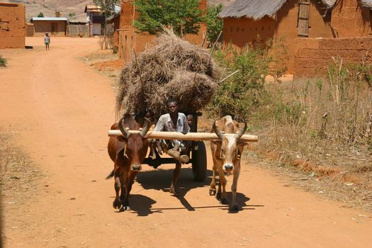 Cart pulled by two oxes in Madagascar