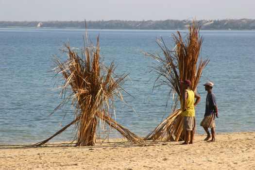 Drying the straw which is used to add roofs to the houses in Madagascar