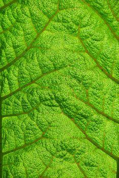 Fern Leaf Closeup Showing Texture