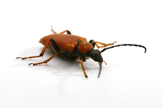 isolated bug