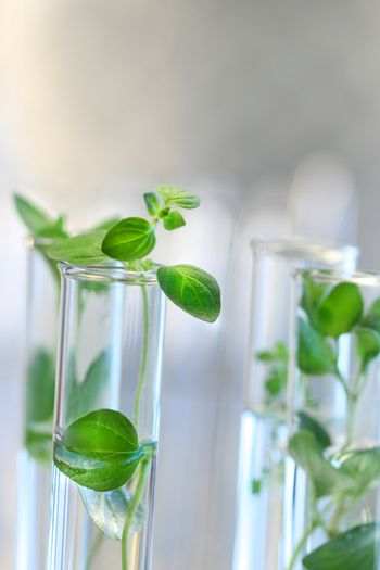Test Tubes with plants