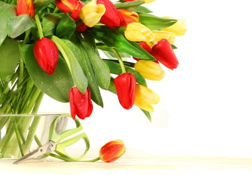 Colored tulips with glass vase