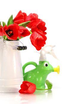 Spring tulips in vase