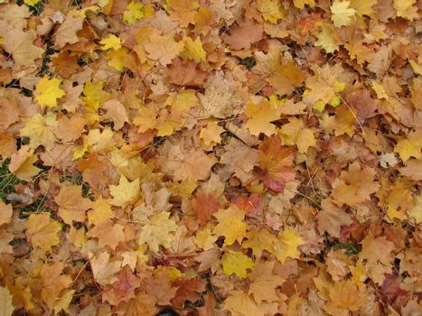 autumn leaves, usable as seasonal background