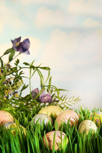Eggs in the grass