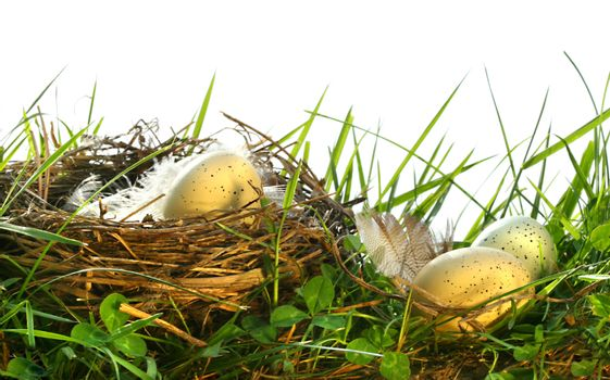 Eggs in the tall grass with nest