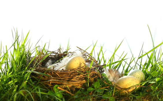 Eggs in the tall grass