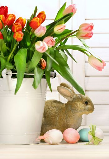 Pot of tulips with rabbit