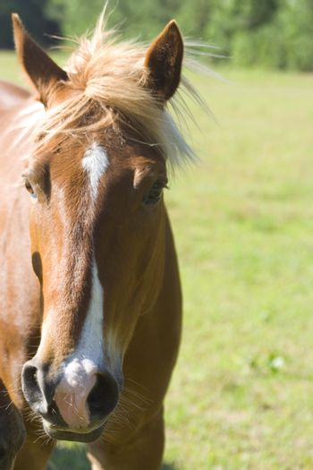 A portrait of a brown and white horse with its mane blowing in the wind.