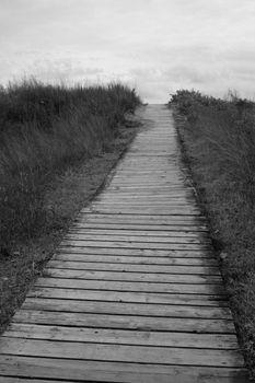 Desolate Path