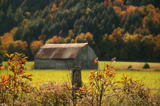 Autumns colors