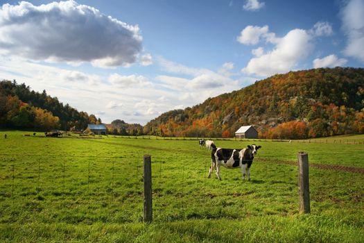 Autum grazing