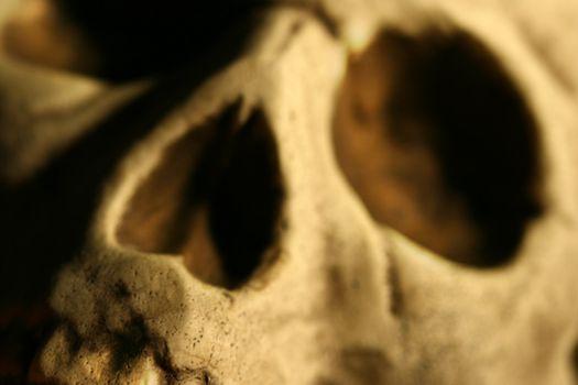 Closeup of skull