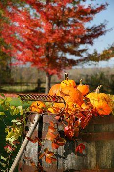 Autumns colorful harvest