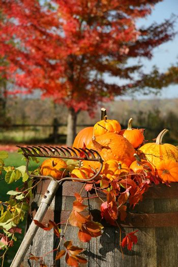 Colorful pumpkins and gourds