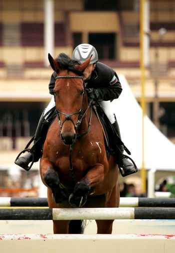 The sportsman on a brown horse jump through an obstacle. The championship of Russia 2006