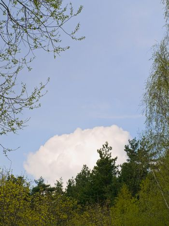 Blue sky with big white clouds under trees spire