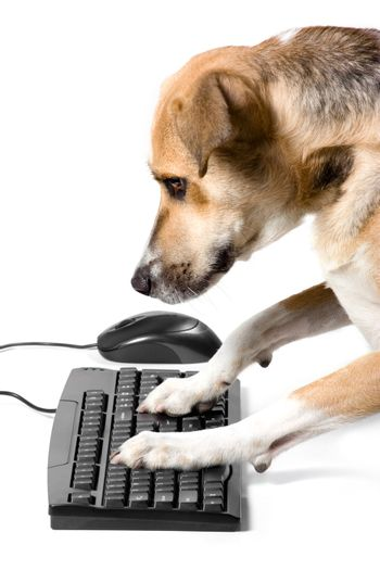 Doggy on keyboard with mouse