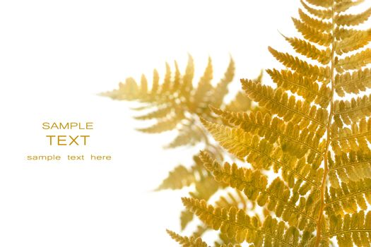 Fern leaves isolated on a white