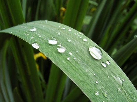 Water droplets on  the iris blade