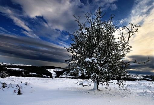 A Snow covered Tree high on Dartmoor