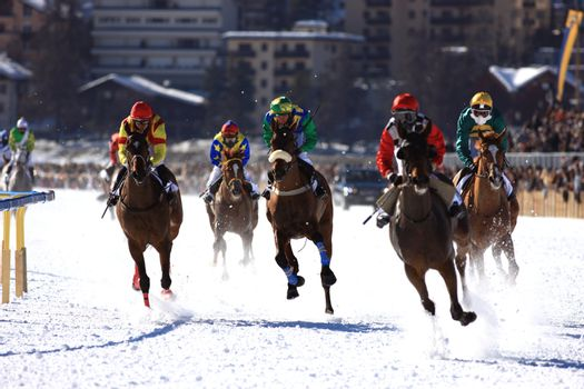 Horse Race in the snow