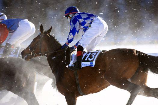 Horse Race on the Snow