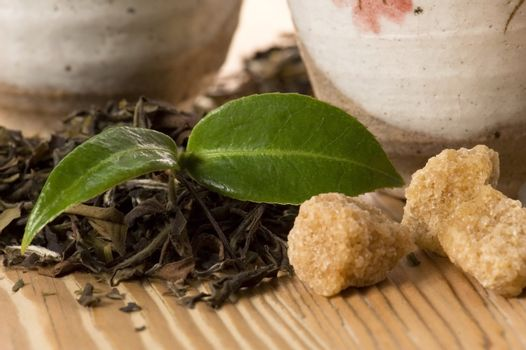 green tea with fresh branch