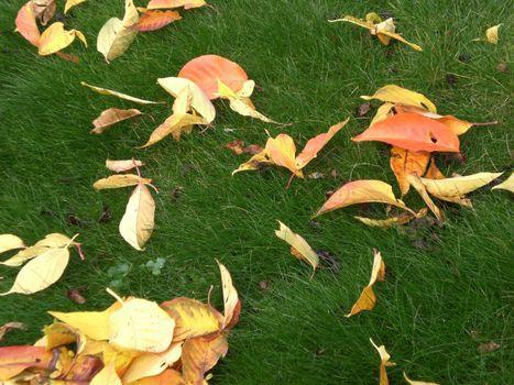 falling leaves as autumn symbol