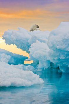 Polar Bear on Frozen Outcrop
