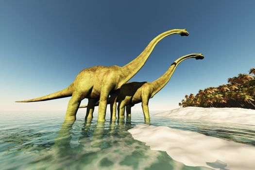 Two Diplodocus dinosaurs wade through shallow waters to get to the vegetation on this island.