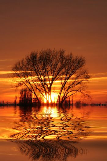 Setting sun behind trees with reflection