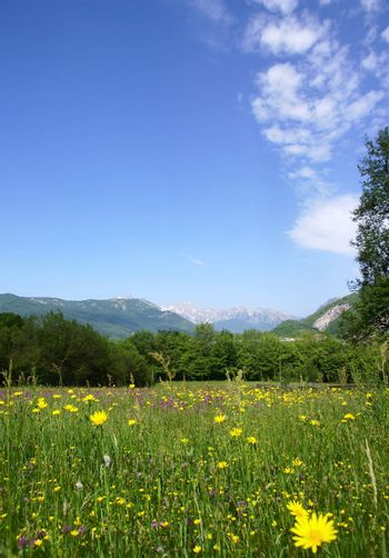 tranquil rural scene with a meadow, forest and mountains