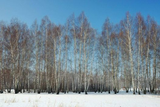 Winter scenery - trees, snow and blue sky