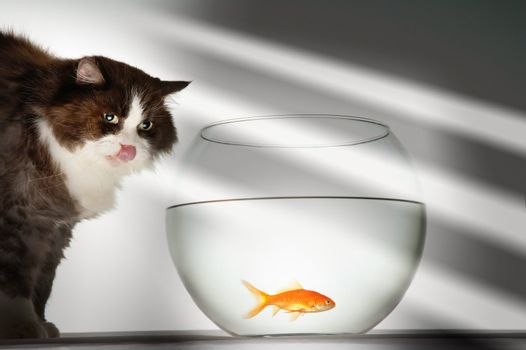Cat Looking at Goldfish in Fishbowl