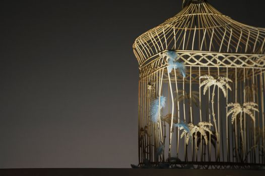 Feathers Stuck on Empty Birdcage