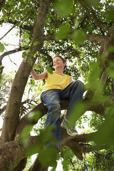 Boy Sitting in Tree
