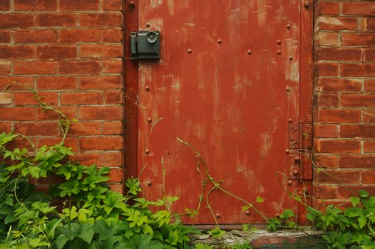 Abstract Vintage Red Door, Brick Wall and Green Vines.