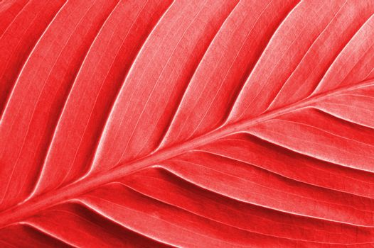 abstract colored leaf texture can be used as background