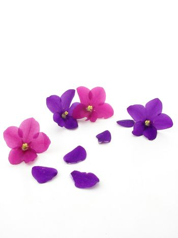 Violets and petals isolated over white background.