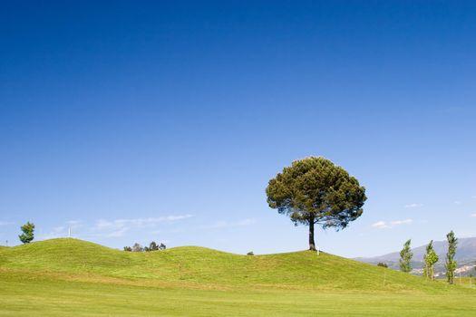 Tree in golf field with deep blue sky